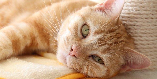 猫がストレスを感じている時の仕草や行動5つ