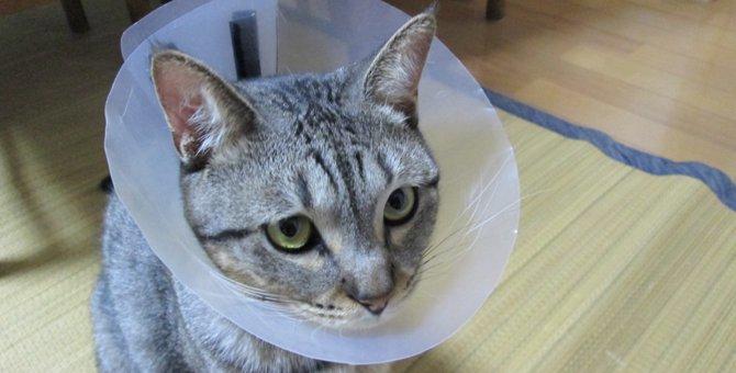 愛猫のためにふちが短いエリザベスカラーを作ってみた!