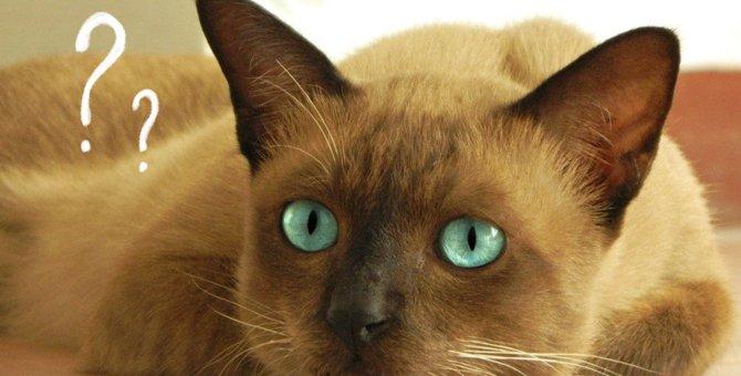 猫のつま先立ち?フローフェン状態って知ってる?