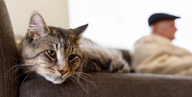 猫と遊ばない飼い主が引き起こす5つのリスク