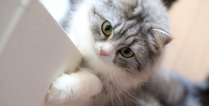 猫ヘルペス感染症の症状やその治療法とは