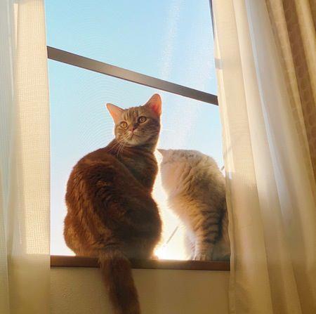 猫と飼い主が「程よい距離感」で暮らすコツ4つ