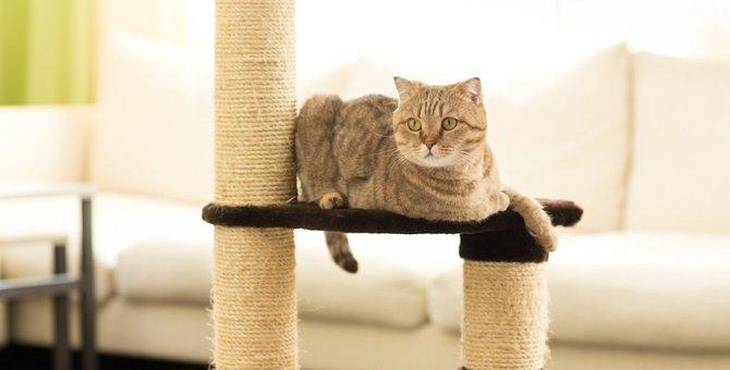 猫がキャットタワーで遊ばないのはなぜ?5つの原因