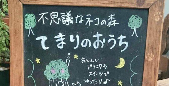 猫カフェ「てまりのおうち」体験レビュー!評判の理由はファンタジーな世界観にあり!