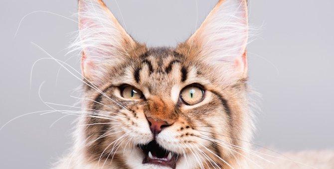 猫に叱られる飼い主の行動13選