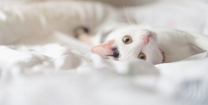 猫の『睡眠妨害』になってしまう飼い主のNG行為5選