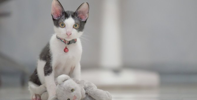 猫の首輪に『鈴』をつけるのはアリ?メリットと注意点を確認!