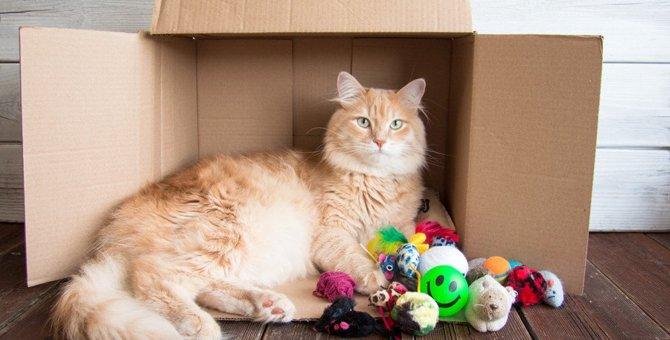 猫が『おもちゃで遊ばなくなった』ときの原因5つと対処法