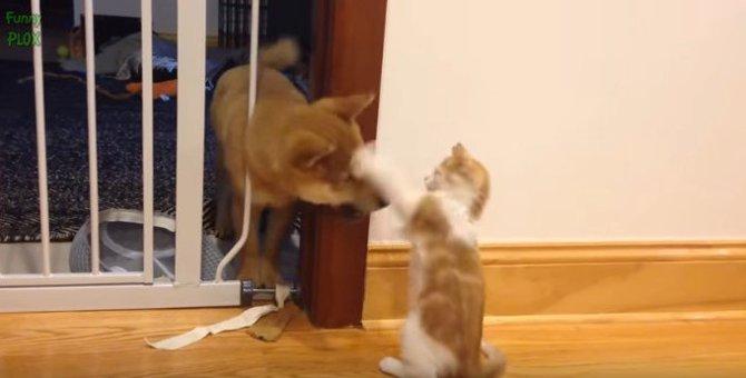 猫 vs. 犬!友達、主従、親子、敵対…色々な関係を全部見せ★