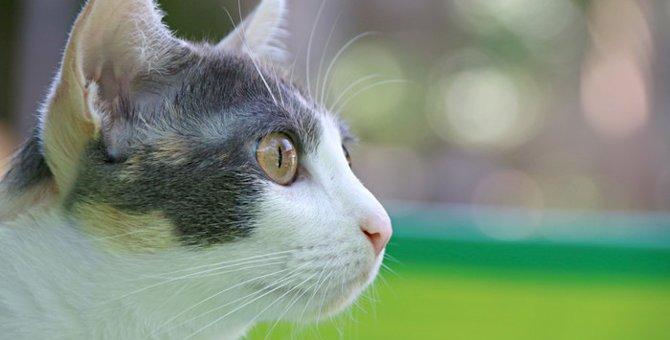 猫のスピリチュアルな行動や体験談