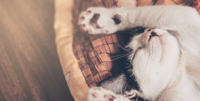 猫の肉球の色が違う理由と性格診断