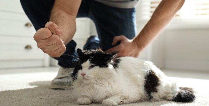 猫にストレスを与える超危険な『叱り方』5つ