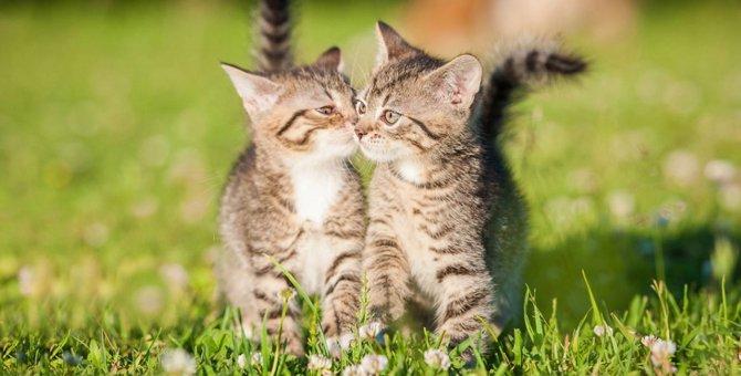 猫の挨拶の仕方と相手による種類の違い