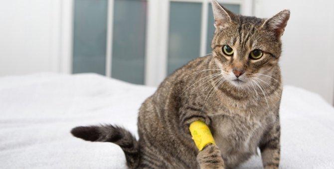 猫が出血をしている時の症状や対処法