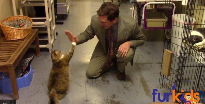 是非日本もやって欲しい!明るく楽しいシェルター猫の紹介動画