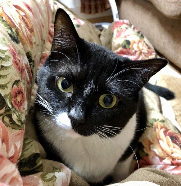 飼い主を「わが子」と思っている猫の行動3つ