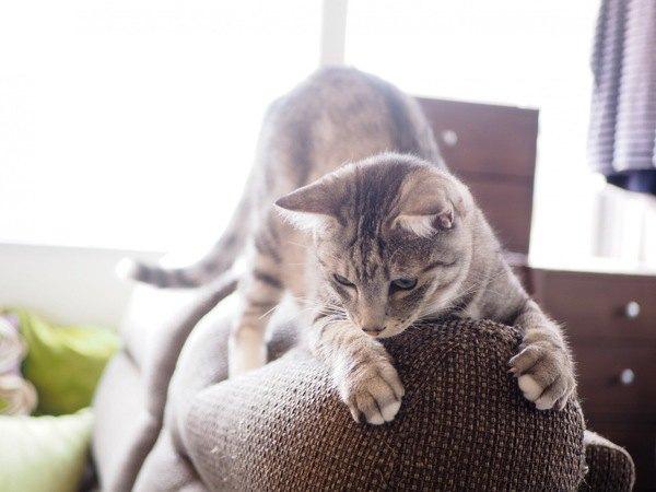 進化にバンザイ!猫との生活に活用したい「強い家具」3つ