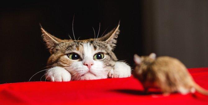 猫の知能はどれくらい?実はすごく記憶力がいいんです!
