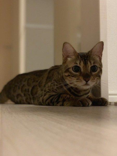 猫が快適な留守番環境とは?5つの条件