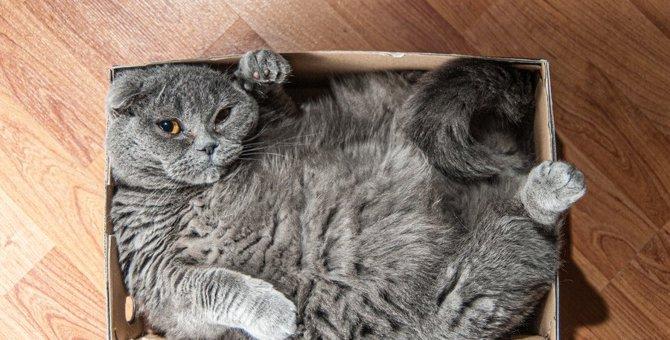 猫に『不快感』を与える環境5つ!すぐできる改善策とは?