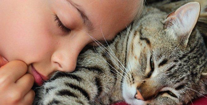 『人見知りをしない猫』に育てる3つの方法