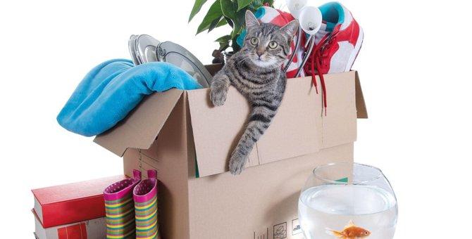 猫と引っ越しをする時に注意するポイント