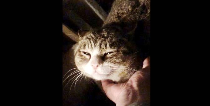 話題の地域猫が『うちのコ』になるまでの感動記録【後編】