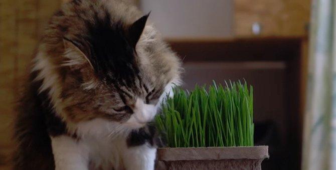草食系男子なボス猫さん