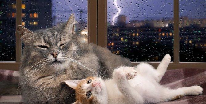 雷にびっくりした猫が逃げ込む場所6つ