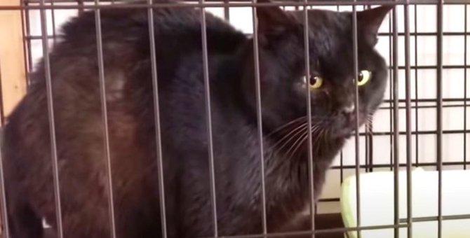 漁港に取り残された黒猫…幸せへの一歩を踏み出す!