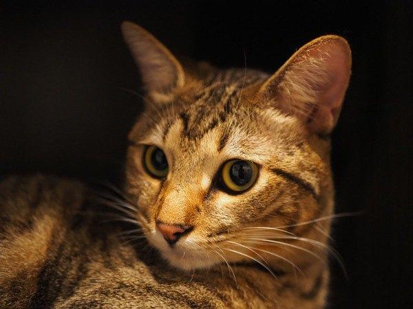 寂しさを感じやすい猫の特徴4つ