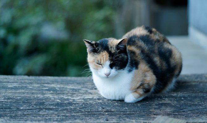 ミケ 山登り 猫 安曇野の「山登り猫」が本に-飼い主と62の山を踏破