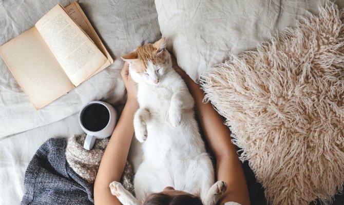 猫を落ち着かせるサプリ ジルケーン とは 効果や与え方 注意点まで ねこちゃんホンポ