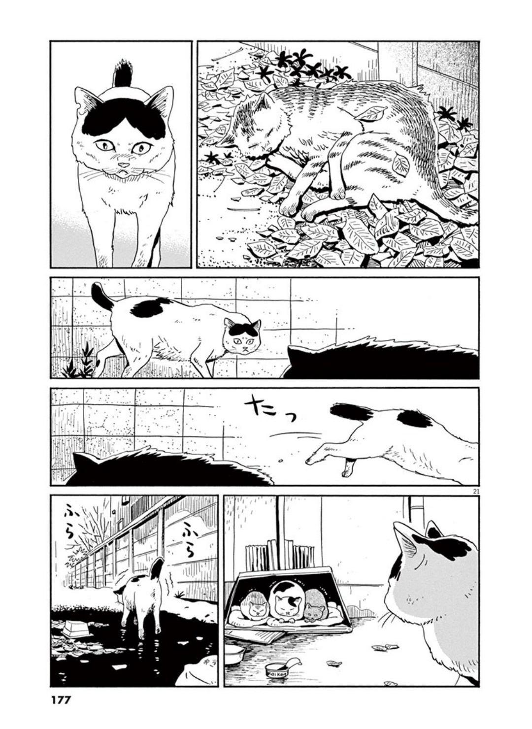家猫ぶんちゃんの一年p21