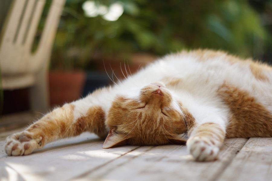 猫は今どんな気持ち?仕草で分かる猫の心理