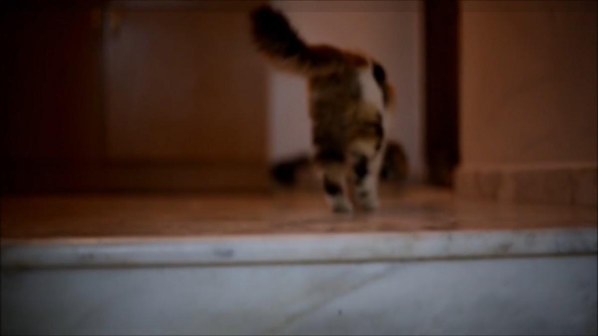 「ママー!」階段が登れなくて助けを呼ぶ子猫ちゃん
