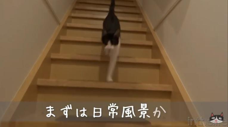 猫に変装したご主人が帰宅!果たしてニャンコの反応は?