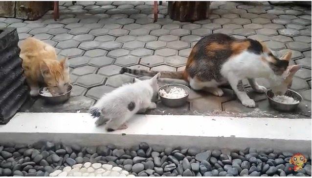怪我した子猫を保護して…