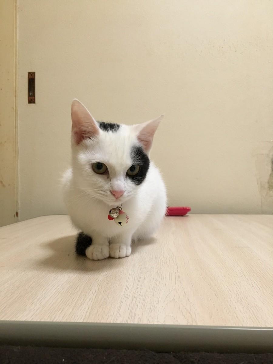 本当は「人が好き!」猫の行動の実験で分かった事