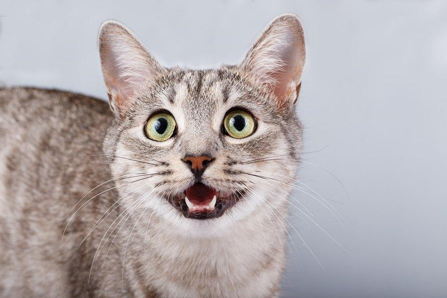 猫が飼い主からの愛情に応えている8つのサイン
