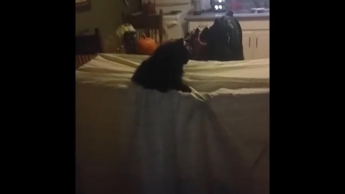 アリ地獄ならぬ、ネコ地獄!?ゆっくり沈んでゆく猫ちゃん