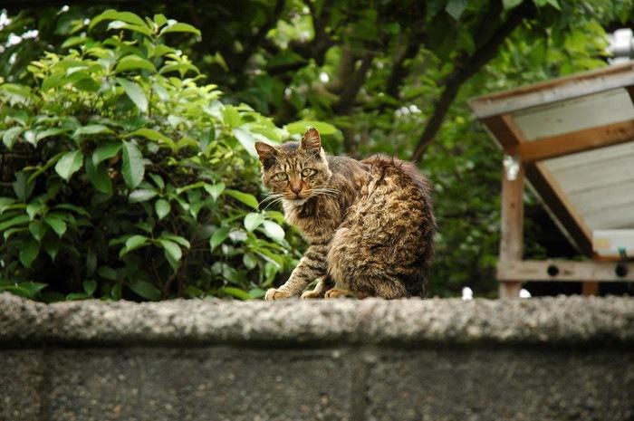 迷い猫を探す方法と気をつけておくこと