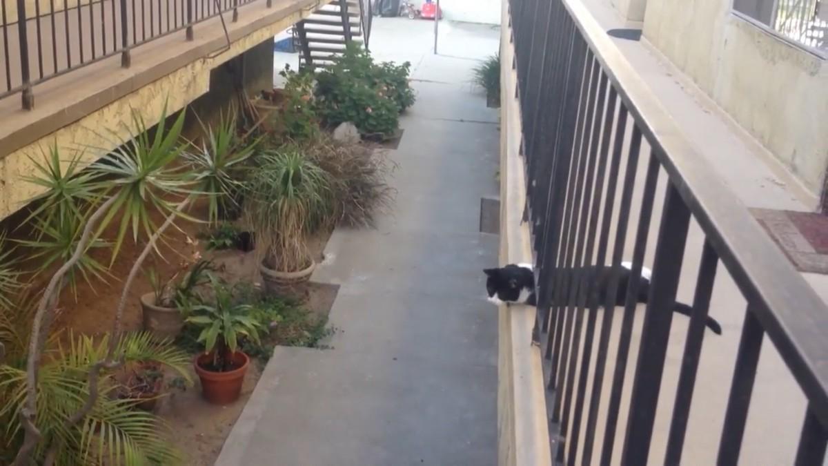 タイミングもばっちり!男の子と猫ちゃん、挨拶のハイタッチ!