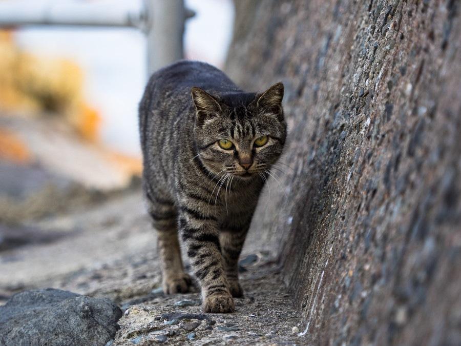 猫が追いかけてくる6つの理由と対処法