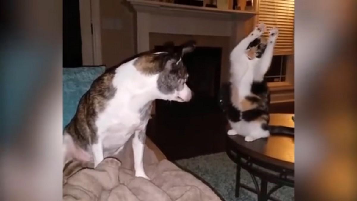 おりゃ~!犬に背後から猫パンチをしようとする猫!しかし犬が振り向くと…?