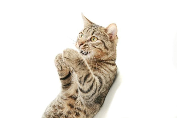 気になる猫ちゃんの「あの鳴き方」の意味