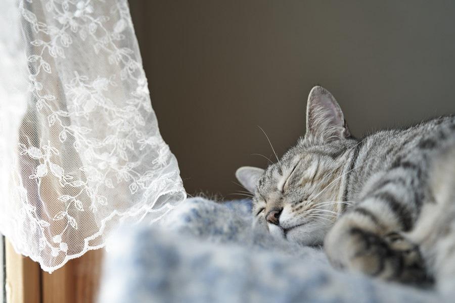 猫がいる家庭で扇風機を使う時の3つの注意点