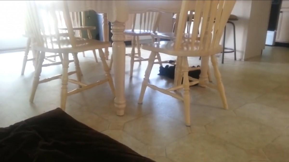 スパイダーキャット現る!並べられた椅子の下をグルグル回る猫