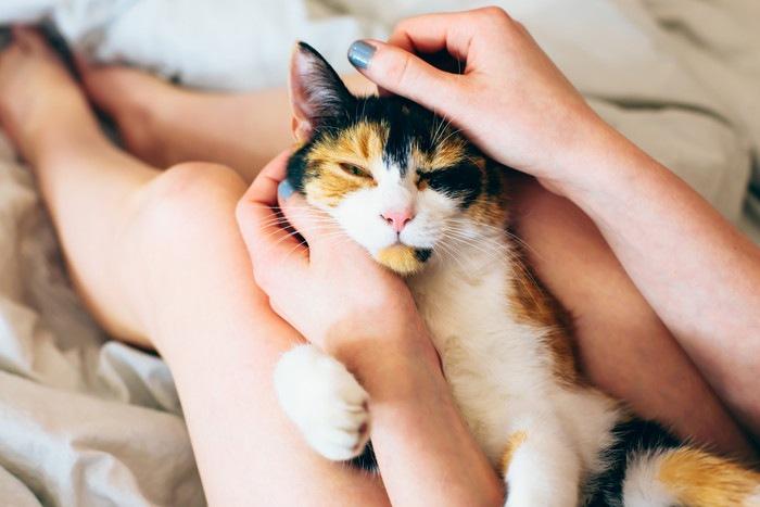 猫が気持ちいいと感じる撫で方やマッサージの方法