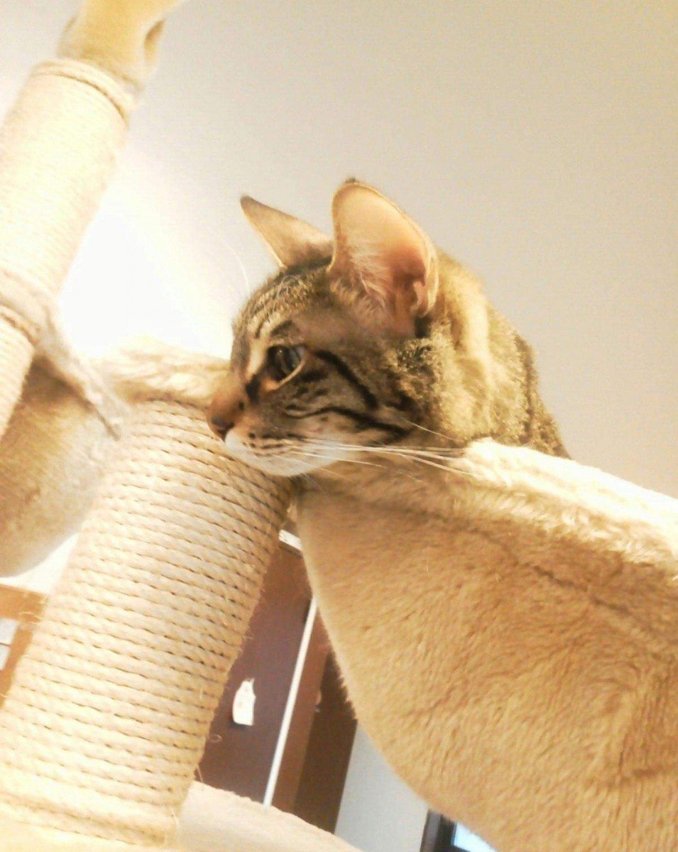 アットホームな猫カフェ♡町田の「ねこのみせ」